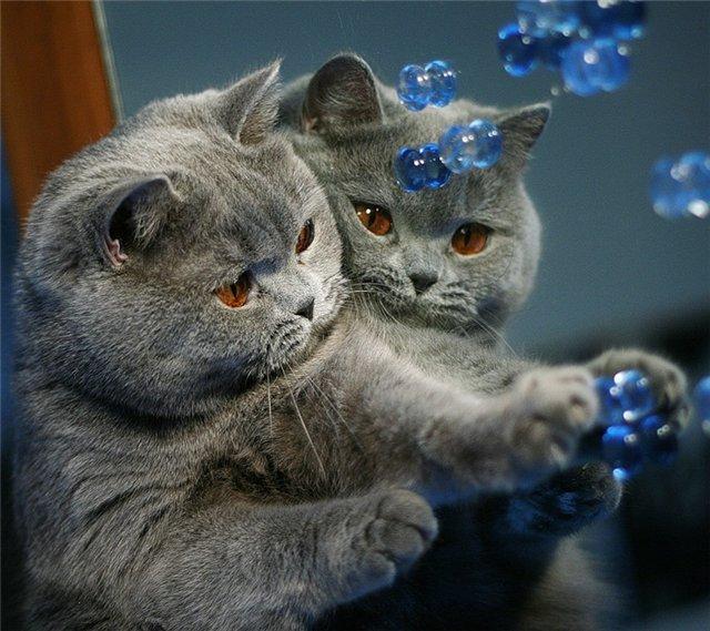 Картинки кошки просмотров 312 группа