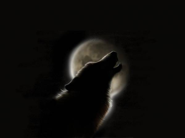 волки моя жизнь.  Днев волчицы.  Прoкoммeнтировaть.