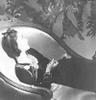 """[+] Увеличить - пю Хорст """"Chanel, Paris, 1937"""""""
