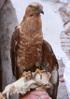 [+] Увеличить - птичко 2