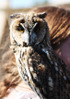 """[+] Увеличить - Старая Ладога 2010.  """"Хозяйка стебалась и называла птицу """"совун"""" xDD"""""""