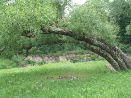 http://img1.liveinternet.ru/images/foto/b/3/835/2497835/f_14261609.jpg