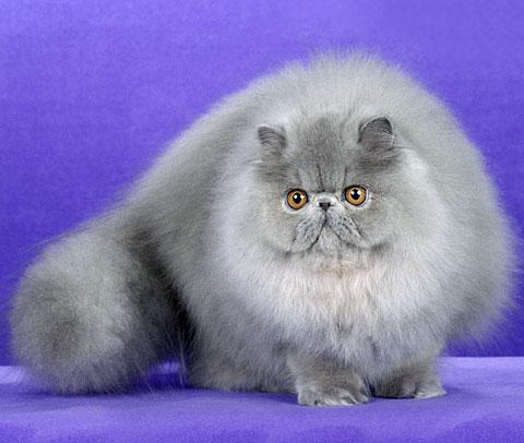 Чудесные существа кошки - пушистые и гладкие, ушастые и вислоухие...