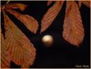 Посмотреть все фотографии серии Луна...
