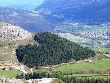 Лес в провинции Кантабрия - север Испании