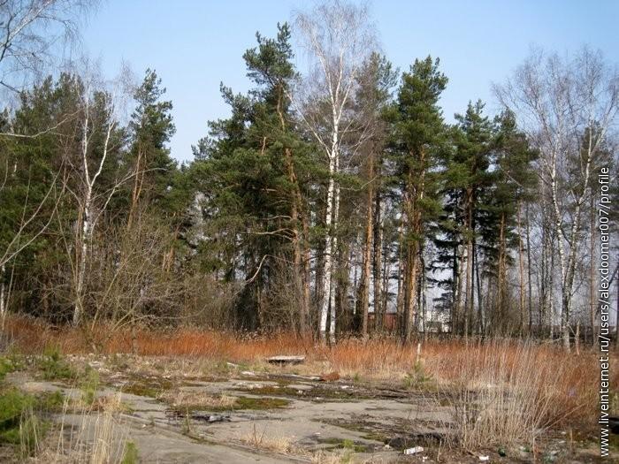 2.Лес и бывшая площадка...