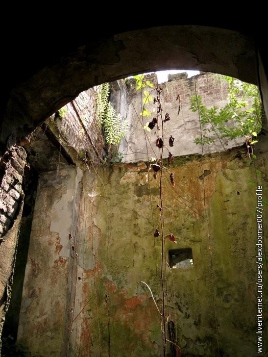 9.Везде были лианы, и кучи растений, обвивавших стены.