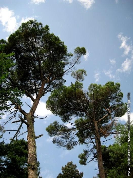 1.В лесу у дворца Смецкого