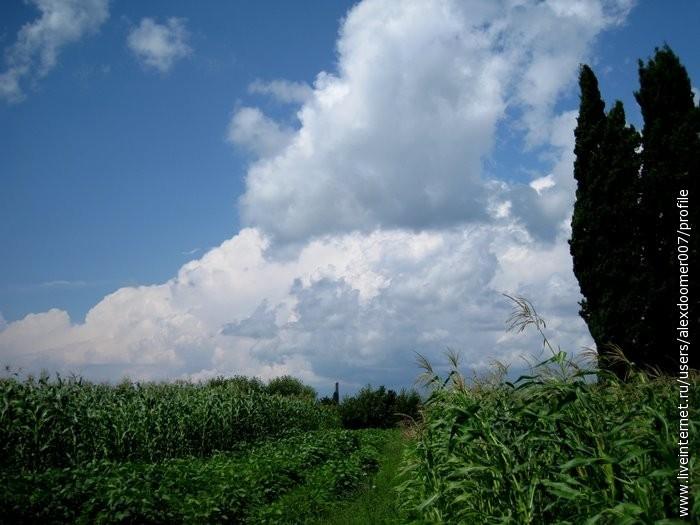3.Кукурузные поля ближе к морю