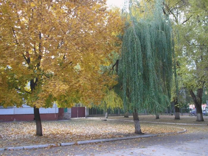 Не все деревья еще поняли, что настала осень