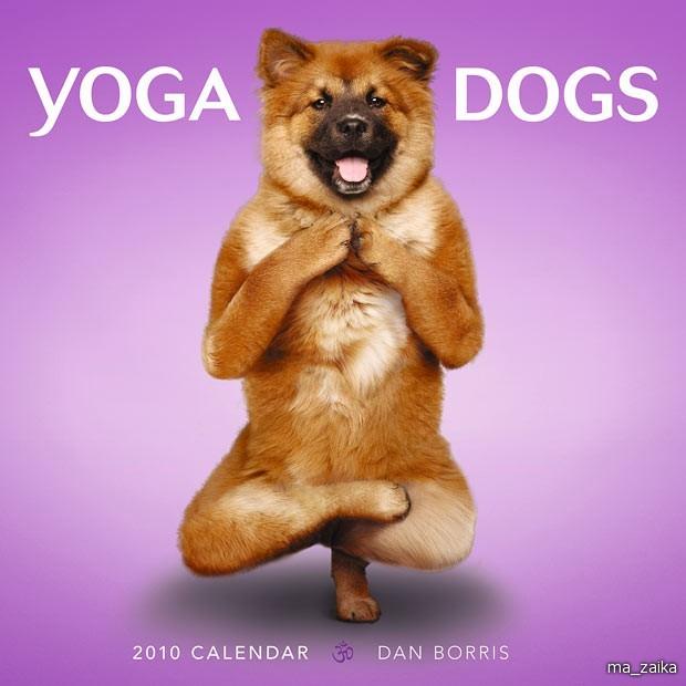 Собаки в позах йоги. Календарь.