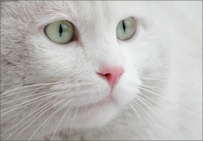 Фото Белая кошка.