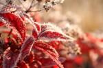 Октябрьские заморозки