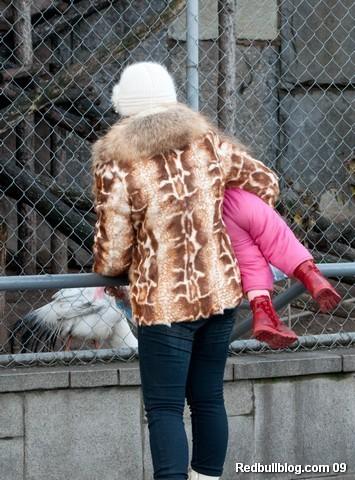 Смотри доча - это курица!