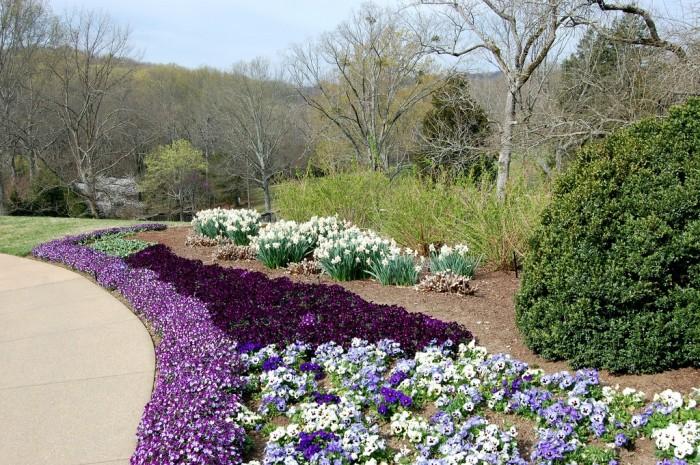 Виола цветы фото