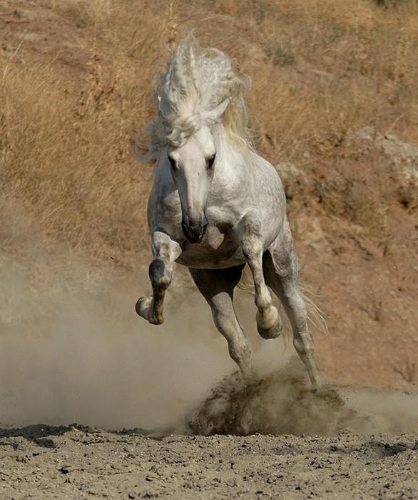 Нажмите на изображение для увеличения Название: лошадь.jpg Просмотров: 55 Размер:117,7 Кб ID:59515.