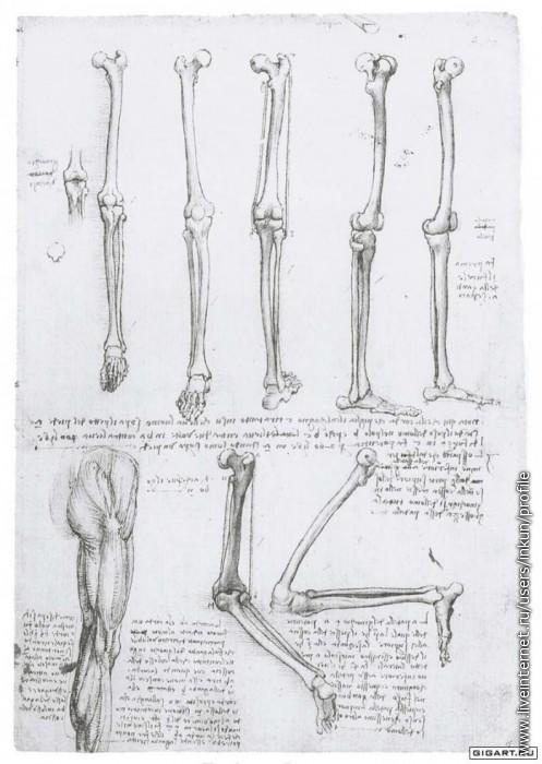 строение костей ноги человека