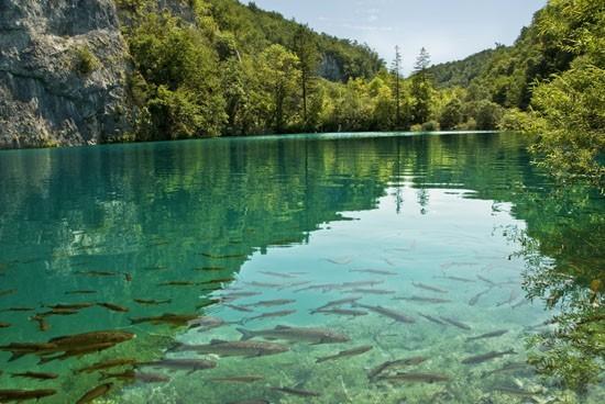 Хорватия 91932