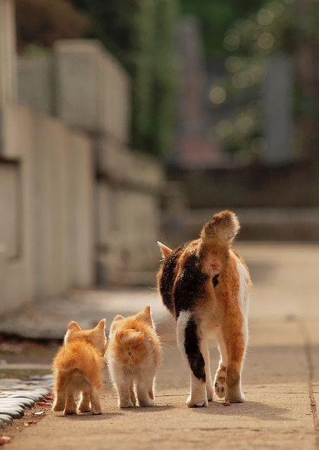 Сколько можно учить. Ходить всегда нужно РЯДОМ!!!