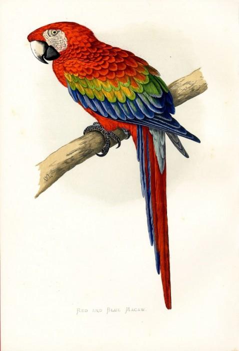 """Схема вышивки  """"Попугай """": таблица цветов."""