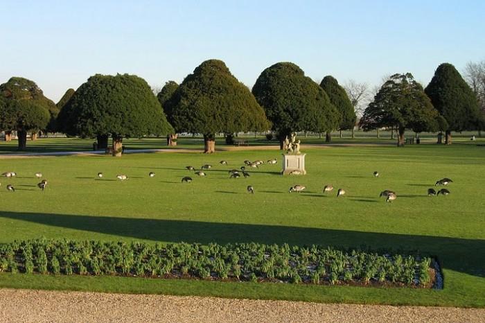 Сад дворца Хэмптон-Кор 53188