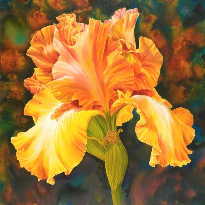 Iris of Gold