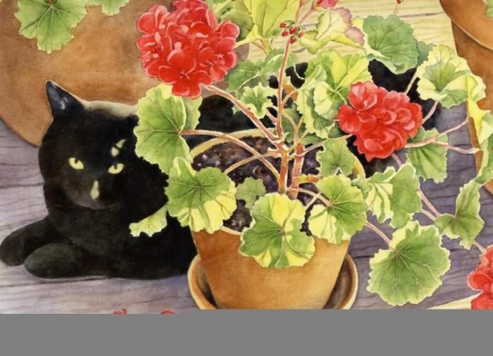 Blackie & Geraniums