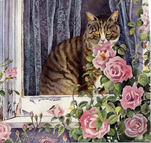 Tabby & Pink Roses