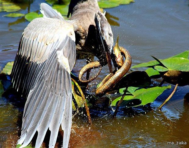 Животные едят друг друга.