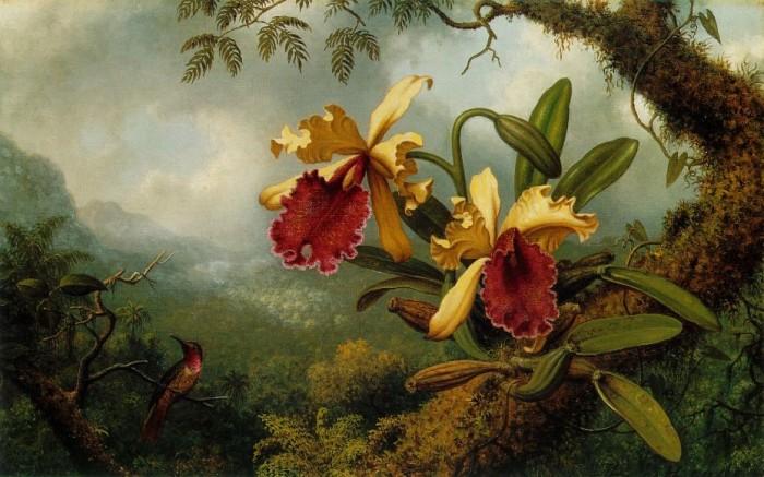 Орхидеи и колибри, 1875-83