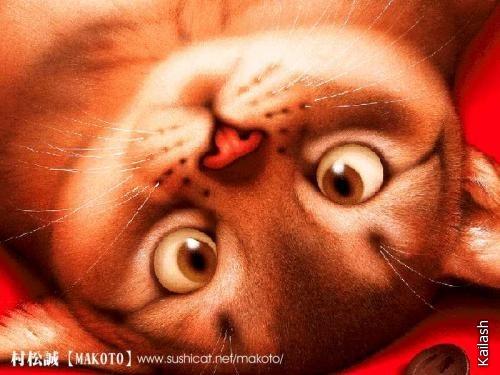 Милые зверушки японского художника Makoto Muramatsu.