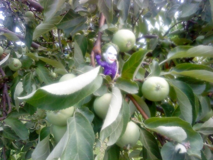 Joker-6 на яблоках