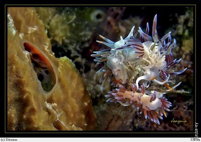 Подводный мир*1