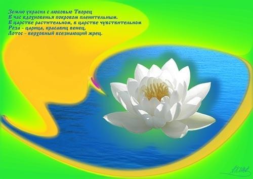 """Лотос - """"жрец"""" растительного царства укажет светлый путь ввысь, к обители красоты и здравия"""