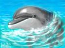 [+] Увеличить - Дельфин-афалина
