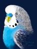 [+] Увеличить - Маленькая, но очень гордая птичка