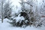 Посмотреть все фотографии серии зима