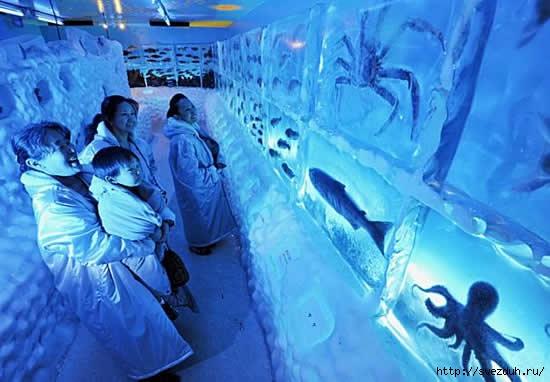 рыбы во льду