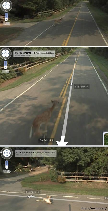 приколы google street view