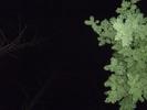 Посмотреть все фотографии серии рябинка, ночь