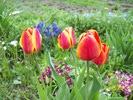 Посмотреть все фотографии серии цветочно-позапрошлогоднее