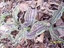 Посмотреть все фотографии серии поздняя весна 20-12