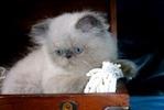 [+] Увеличить - Котёнок