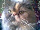 [+] Увеличить - Кошка Мила