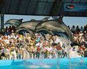 Информация о закрытии Одесского дельфинария оказалась ложной.