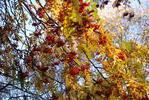 Посмотреть все фотографии серии Московская осень