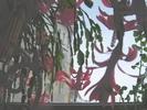 Посмотреть все фотографии серии Цветение декабриста