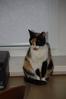 Посмотреть все фотографии серии Моя кошка