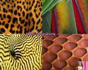 Посмотреть все фотографии серии Фауна макро