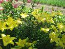 Посмотреть все фотографии серии Цветы на даче